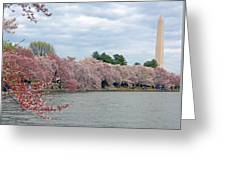 Early Arrival Of The Japanese Cherry Blossoms 2016 Greeting Card
