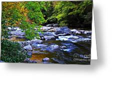 Early Autumn Along Williams River Greeting Card