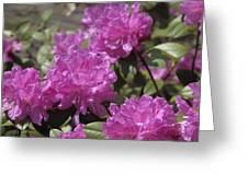 Early Azaleas Greeting Card