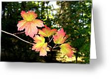 Early Days Of Autumn Greeting Card