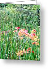 Early Fall Color Greeting Card