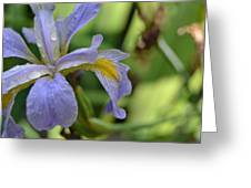 Early Iris Greeting Card
