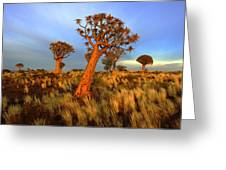 Early Light Greeting Card