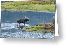 Early Morning Crossing In Grand Teton Greeting Card