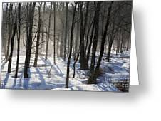 Early Morning Fog In A New Hampshire Forest Greeting Card