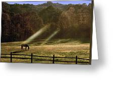 Early Morning Grazing Greeting Card