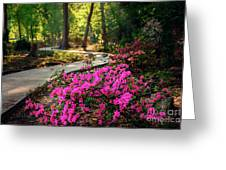 Early Morning In Honor Heights Park Greeting Card