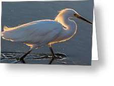 Early Morning Light On Egret Greeting Card