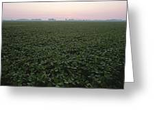 Early Morning Mist Over Soybean Fields Greeting Card by Brian Gordon Green