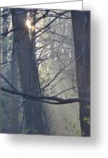 Early Morning Rays Greeting Card