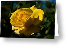 Early Morning Rose Greeting Card