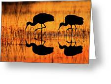 Early Morning Sandhill Cranes Greeting Card