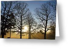 Early Morning Sunrise Through Trees And Fog Greeting Card