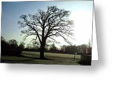 Early Morning Tree In Winter Greeting Card