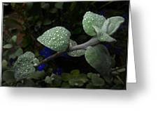 Early Morning Water Droplets Greeting Card
