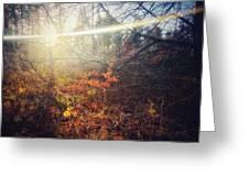 Early Morning Winter Sun Greeting Card