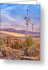 Early Morning Yucca - White Sands - New Mexico Greeting Card