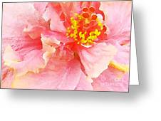 Early Pink Hibiscus Greeting Card