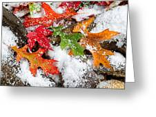 Early Snow During Autumn  Greeting Card