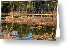 Early Spring Marsh Greeting Card