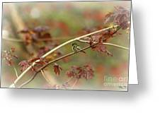 Early Summer Hummer Greeting Card