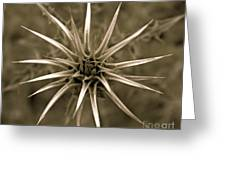 Early Thistle Greeting Card