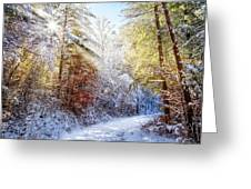 Early Winter's Walk Greeting Card