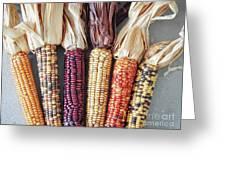 Ears Of Indian Corn Greeting Card