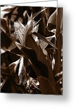 Ears To You Corn - Sepia Greeting Card