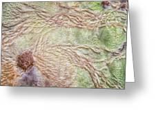 Earth Art 9499 Greeting Card