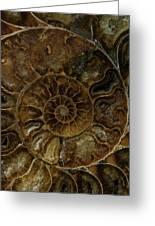 Earth Treasures - Brown Amonite Greeting Card