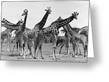 East Africa: Giraffe Greeting Card