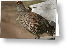 East African Spurfowl Greeting Card
