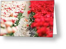 East And West A Dutch Tulip Story Greeting Card