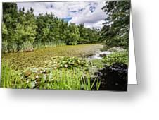 East Cramlington Nature Reserve Greeting Card