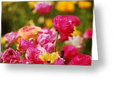 Easter Fields Greeting Card