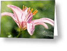 Easter Lily 1 Greeting Card