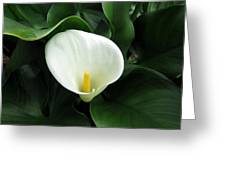 Easter Lily 2 Greeting Card