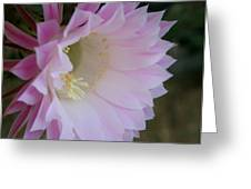 Easter Lily Cactus East 2 Greeting Card