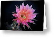 Easter Lily Cactus Greeting Card