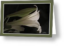 Easter Lily Card Greeting Card