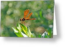 Eastern Amber Wing Dragonfly Greeting Card