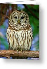 Eastern Barred Owl Greeting Card