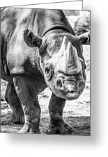 Eastern Black Rhinoceros Greeting Card