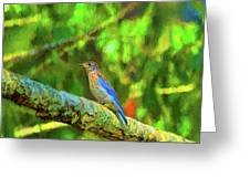 Eastern Blue Bird With Flair Greeting Card
