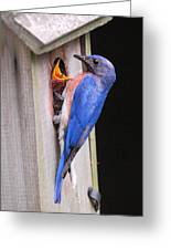 Eastern Bluebird And Chick Greeting Card