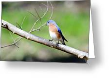Eastern Bluebird Greeting Card by George Randy Bass