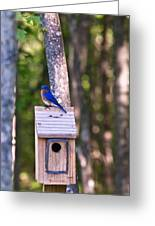 Eastern Bluebird Perched On Birdhouse 2 Greeting Card
