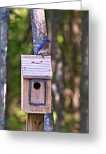 Eastern Bluebird Perched On Birdhouse 3 Greeting Card