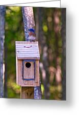 Eastern Bluebird Perched On Birdhouse 4 Greeting Card